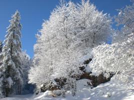 """Neve fresca sul M. Avena, comodo itinerario con le """"ciaspe""""."""
